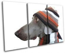 Dog in Hat Animals - 13-0898(00B)-TR32-LO